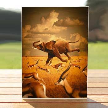 Elephants and Gazelles