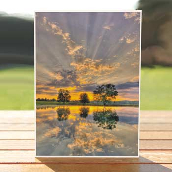 Sunrise red oak greeting cards wisconsins greeting card company 97484 sunrise card recycled greeting cards m4hsunfo