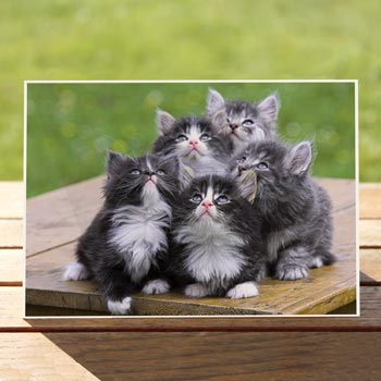 97499-looking-up-cat-birthdaycard