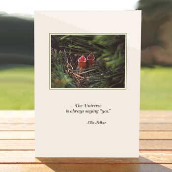 97553-baby-birds-card