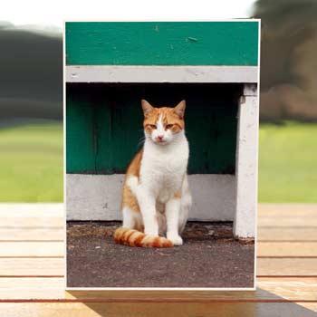 97556-orange-julius-cat-birthdaycard