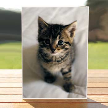 97564-sweetness-kitty-birthdaycard