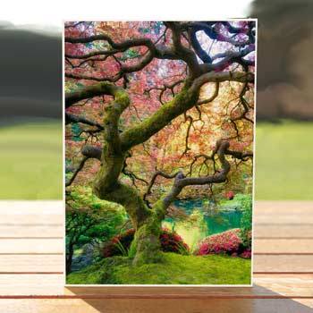 97567-jpanese-maple-tree-card