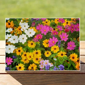 97582-wildflowers-card