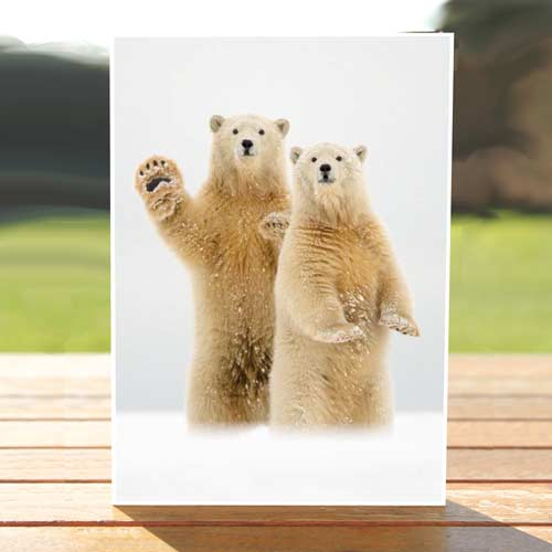 97592-arctic-greeting-card