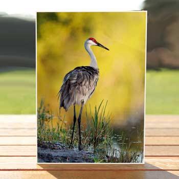 97594-sandhill-crane-birthdaycard