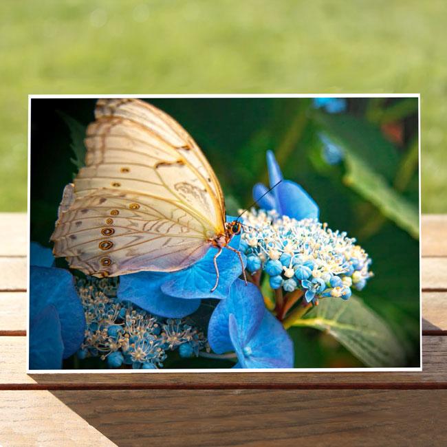 97631-ButterflyonBlueFlower-GreetingCard