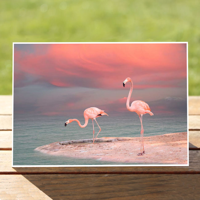 97638-PinkFlamingos-GreetingCard