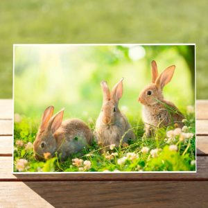 97639-Bunnies-GreetingCard