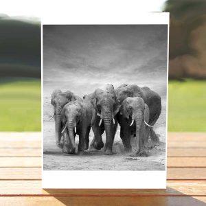 97656_ElephantsCard