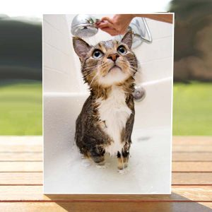 97662_CatInTheShower-Card