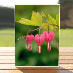 97353-bleeding-hearts-card