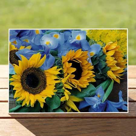 97372-sunflowers-iris