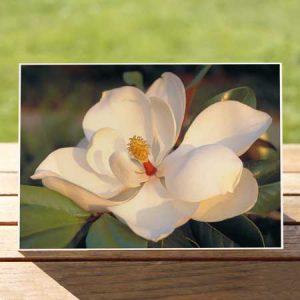 97427-southern-magnolia