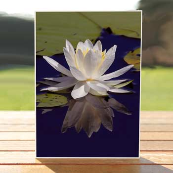 97437-water-lily-card