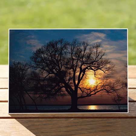 97471-mendota-oak