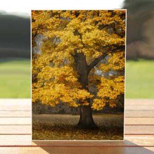 97497-autumn-paris-birthdaycard
