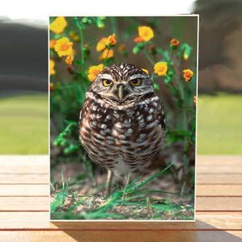 97500-burrowing-owl-birthdaycard