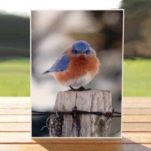 97516-mad-bluebird-birthdaycard