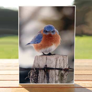 97516-mad-bluebird-birthdaycard