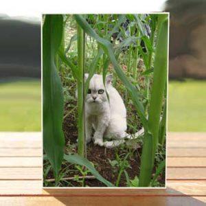 97522-marshmallow-corn-cat-birthdaycard