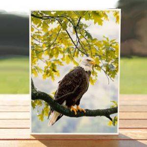 97525-horsehead-lake-eagle-card