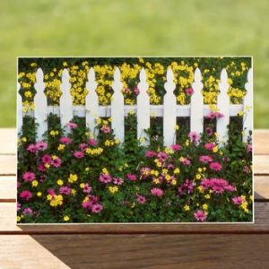 97528-picket-fence-purple-daisies-card