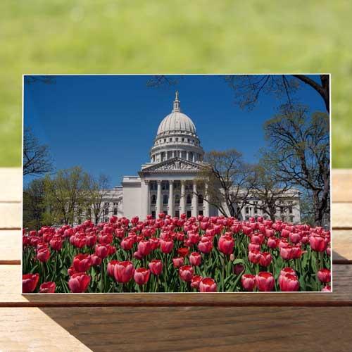 97548-capital-tulips