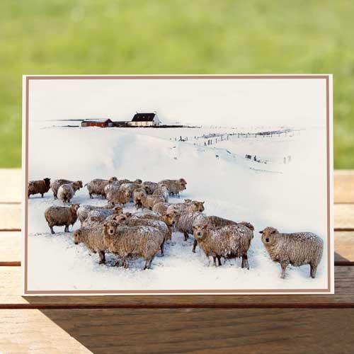 97487-sheep-winter-birthdaycard