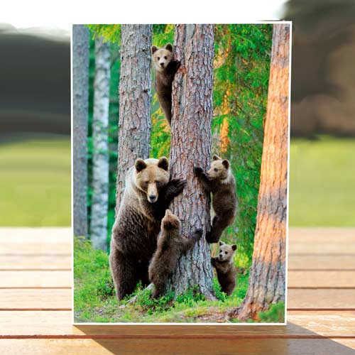 97599-BROWN_BEAR_CUBS