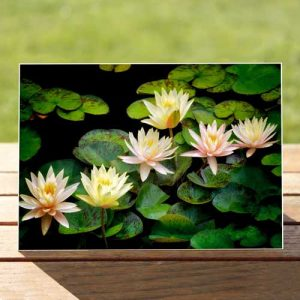 97600-white-lillies-bloom