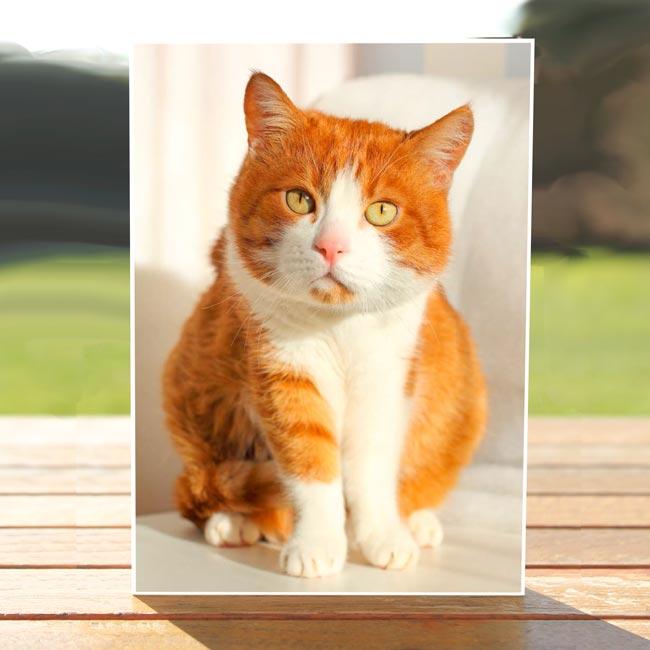 97627-Beasley-catcard